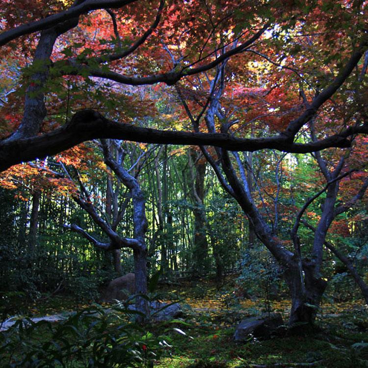 京都観光 秋のおすすめ紅葉スポット その2